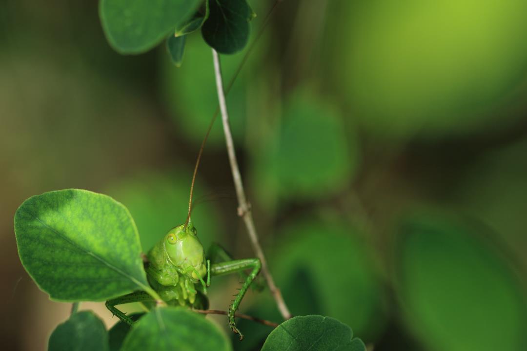 Fauna en flora in de kleuren van de Ardennen