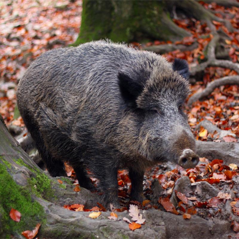 Het wildpark La Roche-en-Ardenne