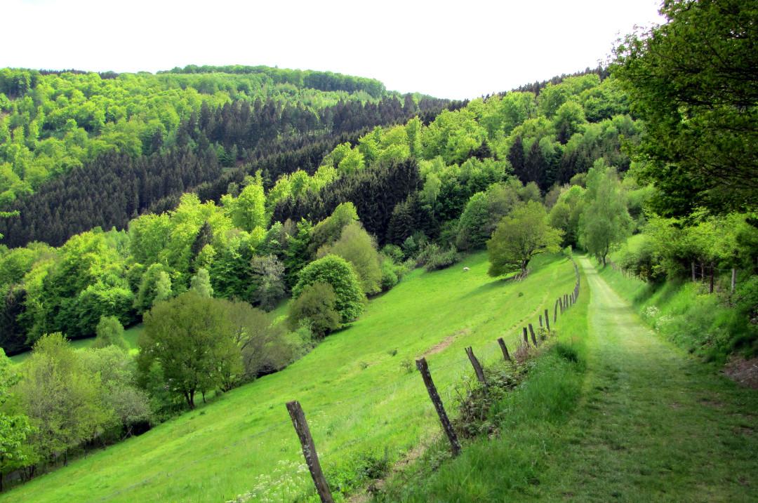 Wandelen in de Belgische Ardennen