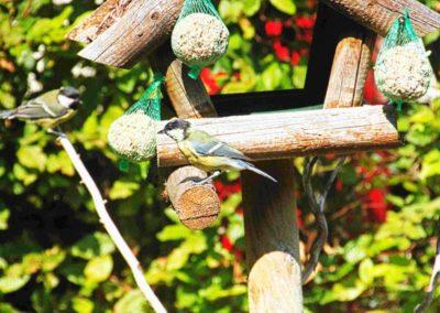 de-kleine-vogels-van-de-camping