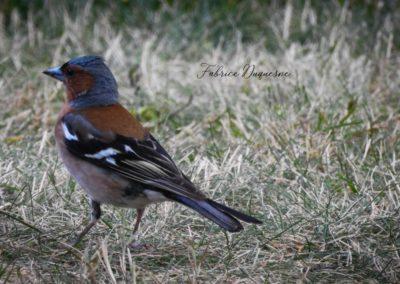 ornithologische-parken-in-de-ardennen