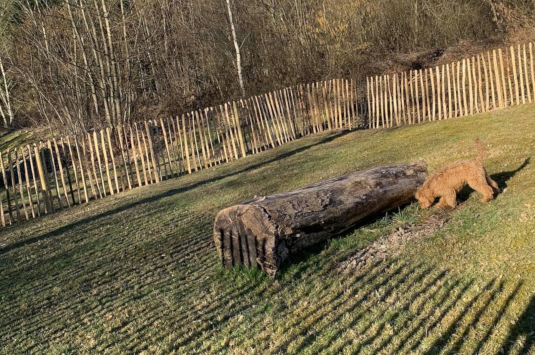Hondenpark