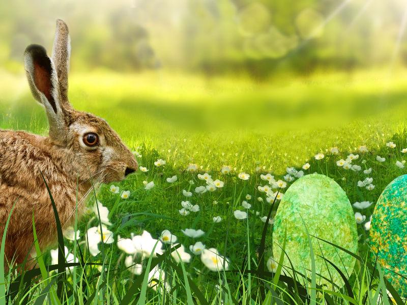 Visite du lapin de Pâques