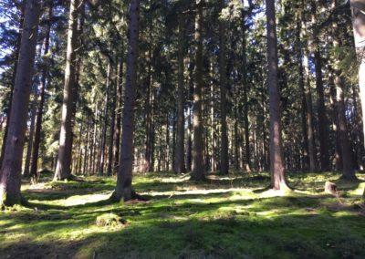 concours-photo-camping-le-val-de-l-aisne-dans-les-ardennes-belges (8)