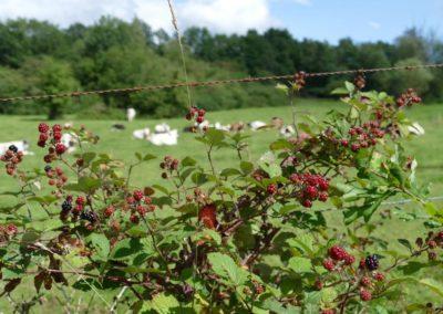 concours-photo-camping-le-val-de-l-aisne-dans-les-ardennes-belges (9)