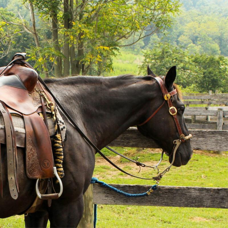 Randonnée en cheval dans les Ardennes belges