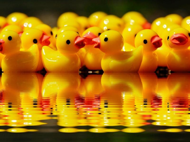 Course aux canards